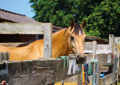 Chevaux & poneys