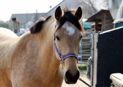 Chevaux&poneys11