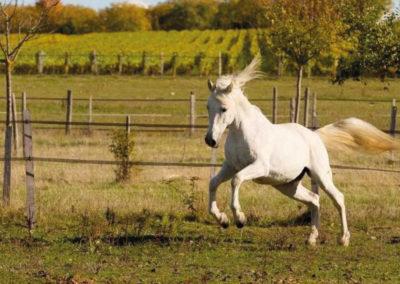 Chevaux&poneys2