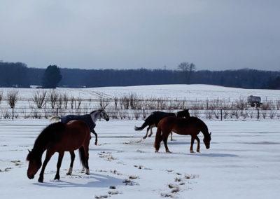 Chevaux&poneys3