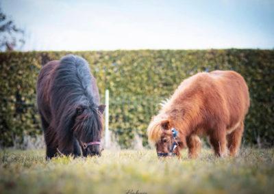 Chevaux&poneys5