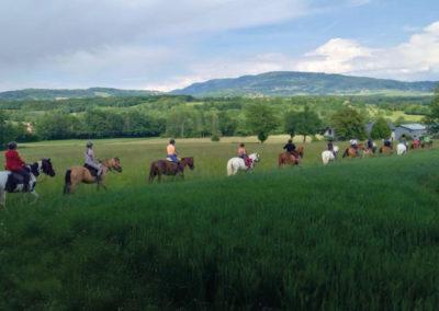 Chevaux&poneys9